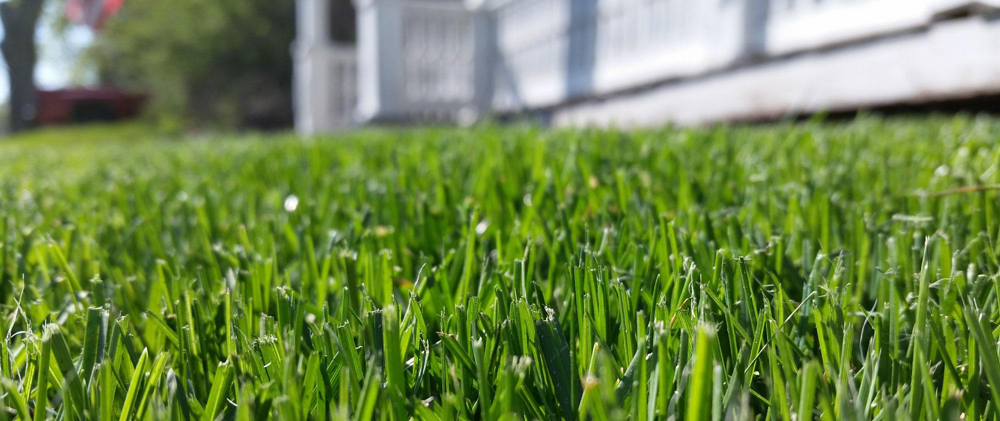 spray-n-grow-hydro-seeding
